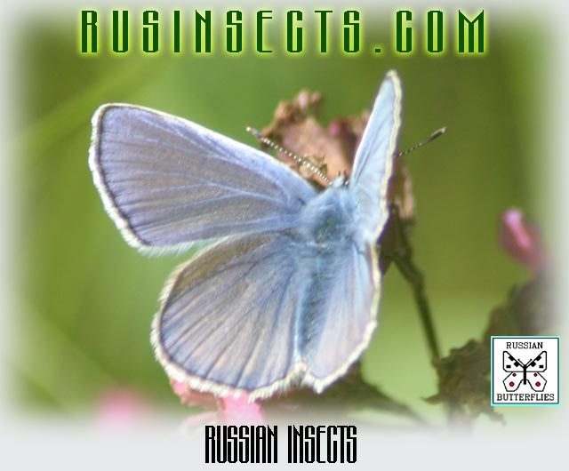 Click to enter Russian Insects website